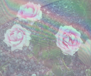 background, flowers, and bubbles image
