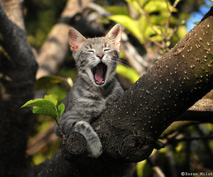 cat, animals, and funny image