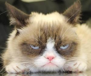 cat, funny, and grumpy cat image