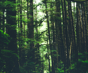 forest and tumblr image