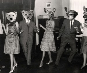 animal, black and white, and party image