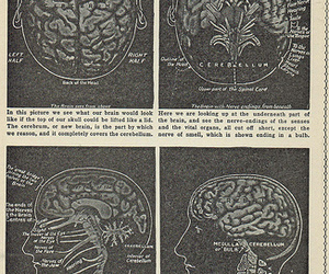 brain, illustration, and science image