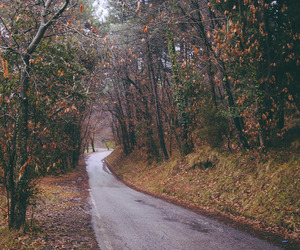 autumn, road, and nature image