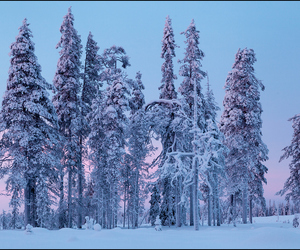 finland, snow, and trees image