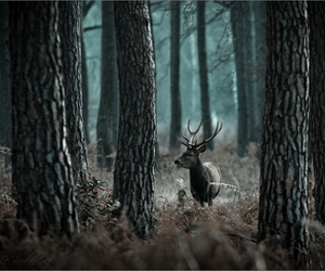forest, deer, and photography image