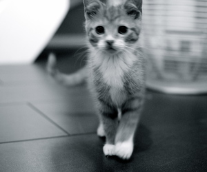 black and white, cat, and Helsingborg image