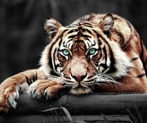 amazing, eyes, and animal image
