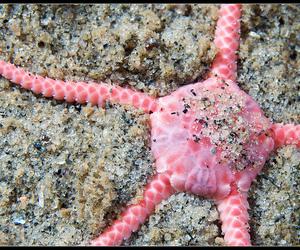 brittle, macro, and sea image