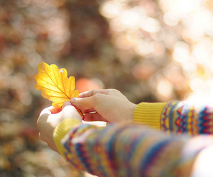leaves, autumn, and sweater image