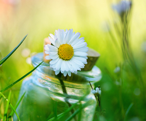 flowers, daisy, and grass image