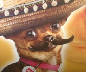 chihuahua, funny, and mexican image
