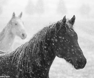 horse, snow, and winter image