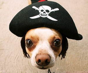 dog, pirate, and cute image