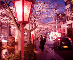 japan, cherry blossom, and night image