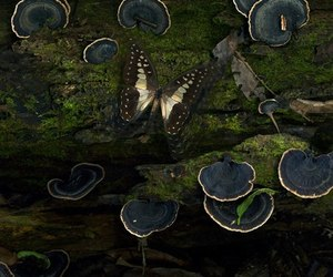 butterfly, nature, and mushroom image