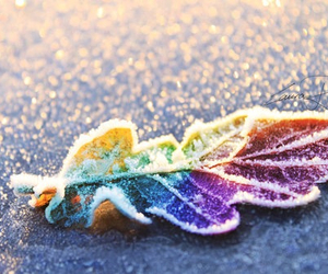 leaves, rainbow, and winter image