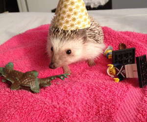 adorable, hedgehog, and awww image