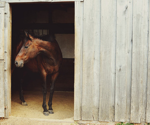 horse, animal, and stable image