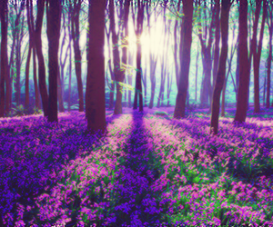 flowers, forest, and purple image
