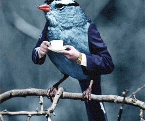 bird, tea, and funny image