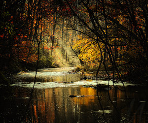 forest, trees, and water image