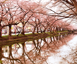 beautiful, cherry blossom, and pink image