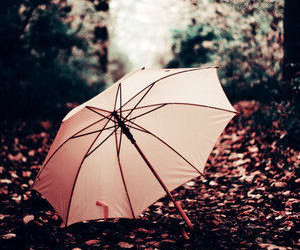 umbrella, pink, and autumn image