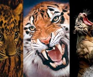 leopard, tiger, and tigris image