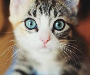 adorable, eyes, and cats image