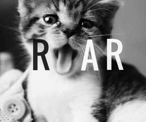 baby, kitty, and katy perry image