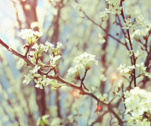 flowers, photography, and beautiful image