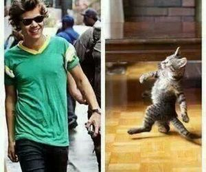 Harry Styles, cat, and one direction image