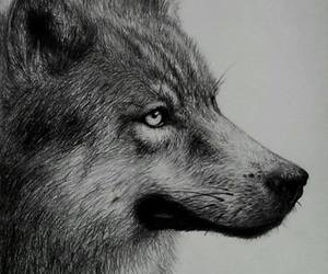black and white, drawing, and wild image