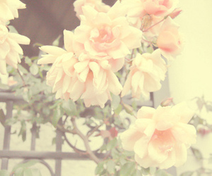 floral, pastel, and pink image