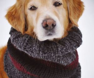 god, scarf, and cute image