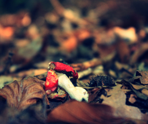 autumn, dof, and fall image