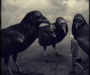 crow, bird, and old image