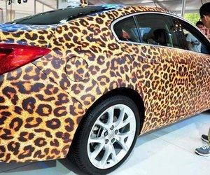 car and leopard image