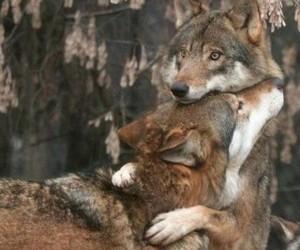 wolf, animal, and hug image