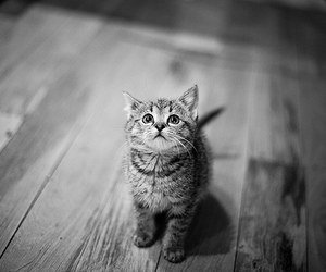 black and white, cat, and cats image
