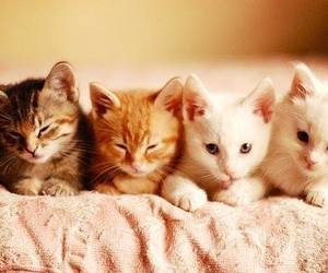 cute cats meow image
