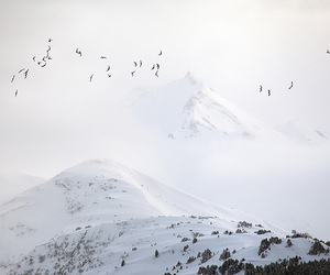 mountains, snow, and birds image