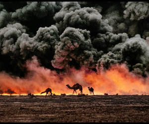 fire, camel, and photography image