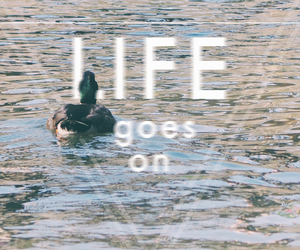 duck, travel, and life image