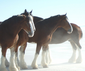 bonneville, equestrian, and flats image