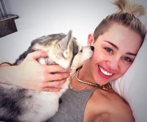 dog, miley, and miley cyrus image