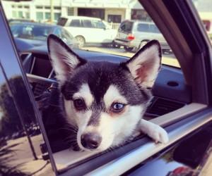 dog, fox, and james image