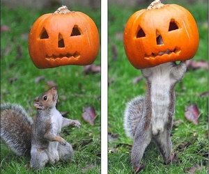 funny, pumpkin, and squirrel image
