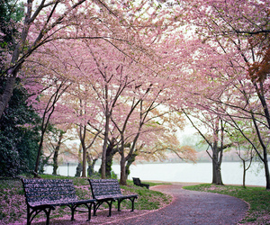 park, pink, and bench image