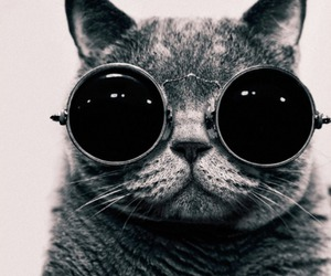 cat, glasses, and cool image